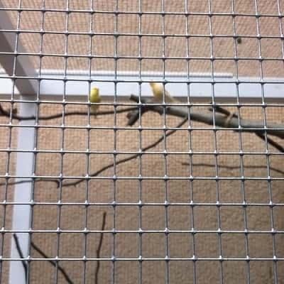 Volieren Volierendraht Drahtgitter Vogelkafig Gitter Fur Den