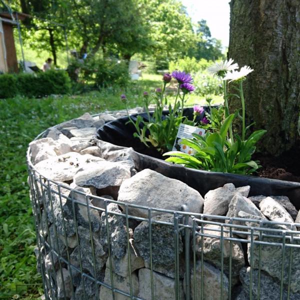 Hochbeet als Baumumrandung zum bepflanzen