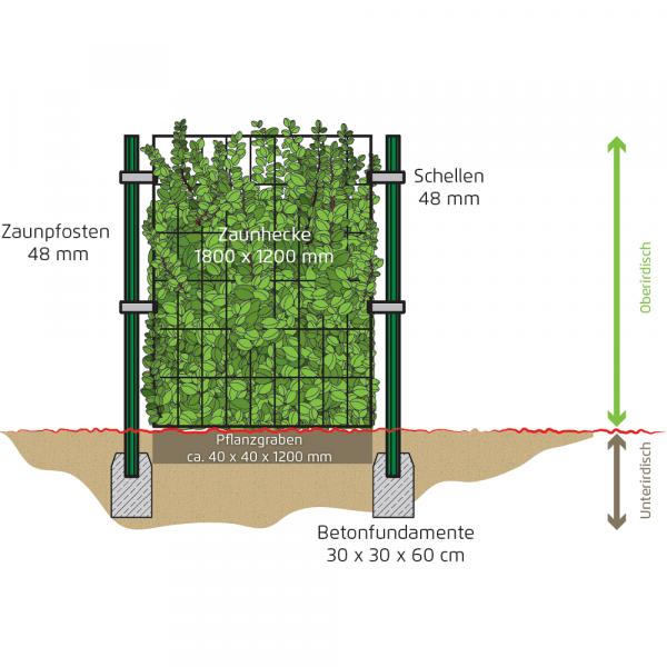 Zaunhecke im Garten aufgebaut