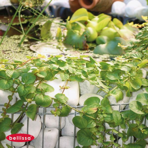 Hochteich Fertigteich als Bausatz für Garten und Balkon